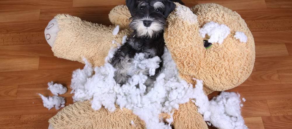 cachorro com o ursinho bege que rasgou inteiro