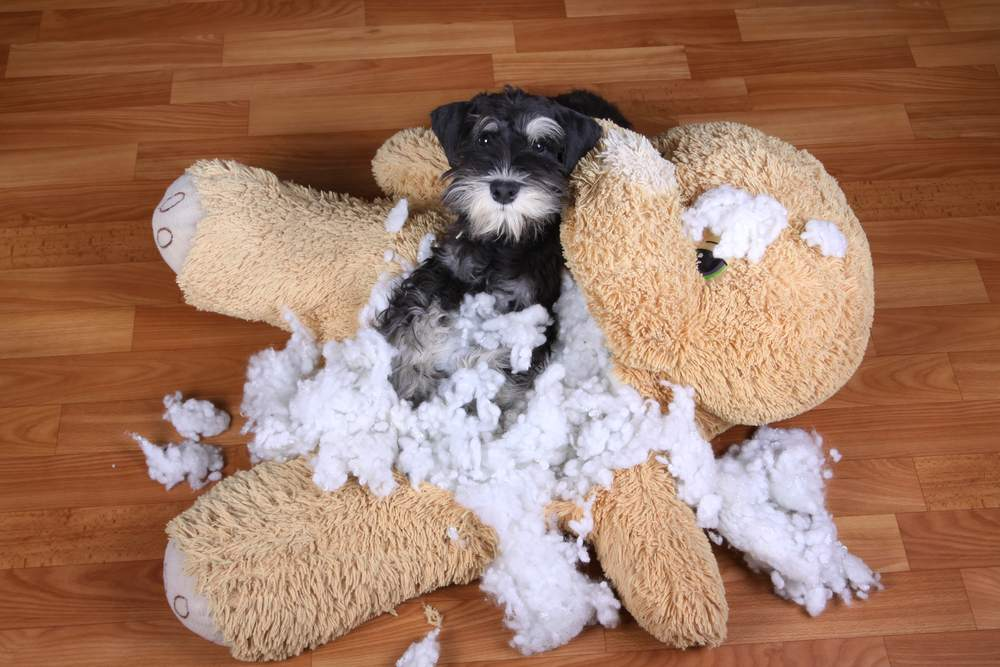Veja as ideias legais e resistentes para o seu cachorro