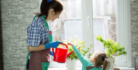 colocar plantinhas em casa