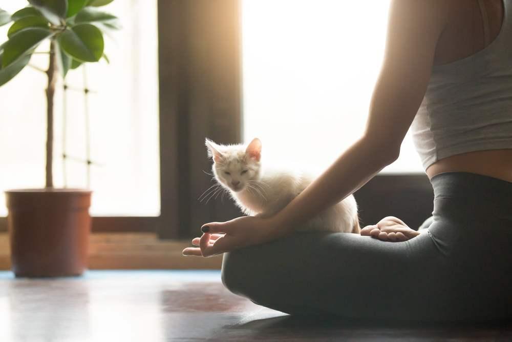 Espaço 'zen' em casa: 6 dicas de como criar um espaço para relaxar