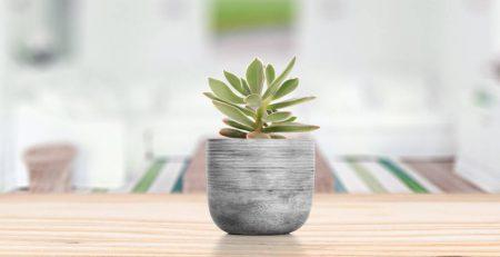 planta suculenta na decoração