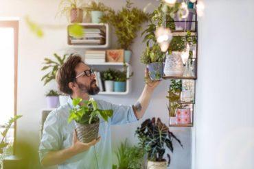Plantas que melhoram a qualidade do ar de casas e apartamentos